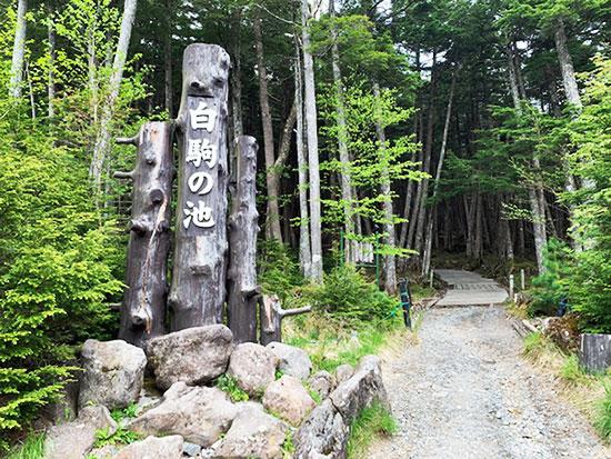「太平ツアー」で松原湖と神秘的な苔の森・白駒池を散策してきました